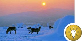 Reindeer in the snow in Lapland